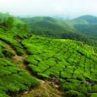 20080104-Kerala-Eravikulam_NP-0172