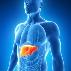 Hepatitis-C-liver