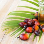 Palm oil products banned in Iceland image