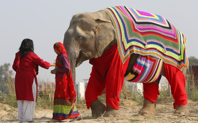 elephant-jumpers-4