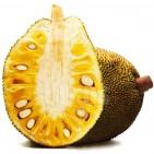 jackfruit_thailand_view1