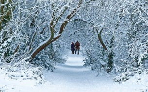 landscape-1479129881-snow-walk